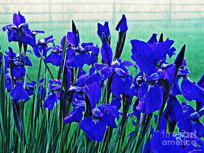 Photograph - Irises At Dawn by Sarah Loft