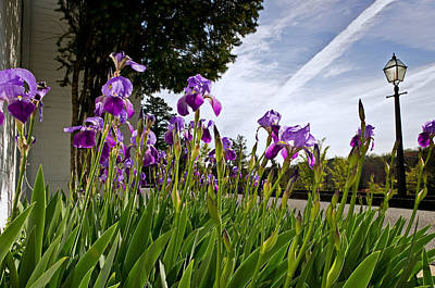 Photograph - Irises At The Federal Executive Institute by Lori Coleman