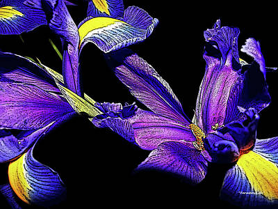 Photograph - Irises From Grandma by Harold Zimmer