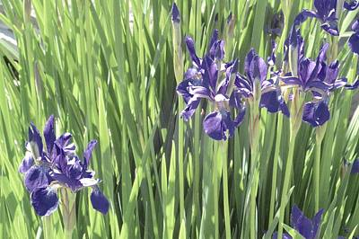 Photograph - Irises In A Garden by Photography by Tiwago