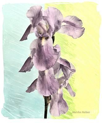 Light Paint Mixed Media - Irises In A Row by Marsha Heiken