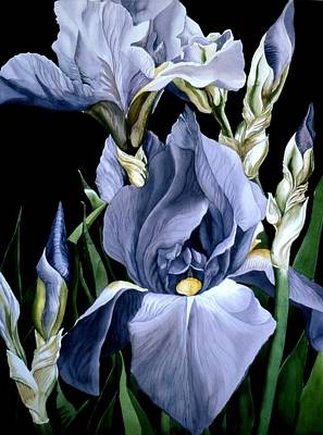 Irises In Blue Art Print by Alfred Ng
