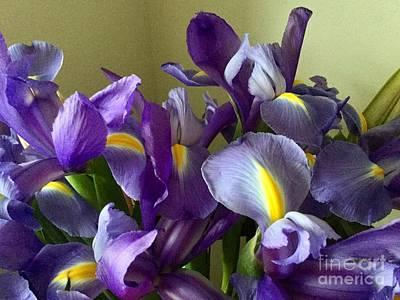 Photograph - Irises by Patricia E Sundik