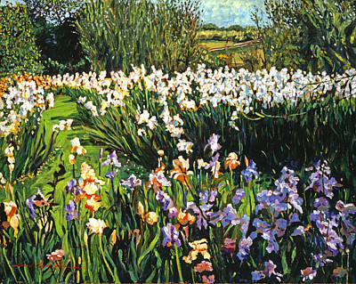 Painting - Irises Provence by David Lloyd Glover