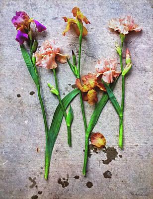Photograph - Irises True Grit by Anna Louise