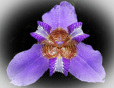 Digital Art - Irises by Vilma Zurc