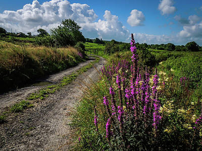 Photograph - Irish Country Trail In Summer by James Truett