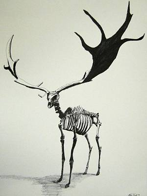 Irish Elk Skeleton Art Print by Steven Frost