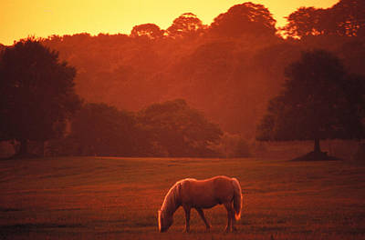 Irish Horse In Gloaming Art Print by Carl Purcell
