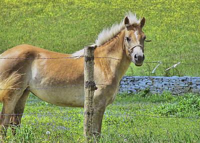 Photograph - Irish Pony by JAMART Photography