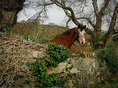 Photograph - Irish Roan by Kathleen Scanlan