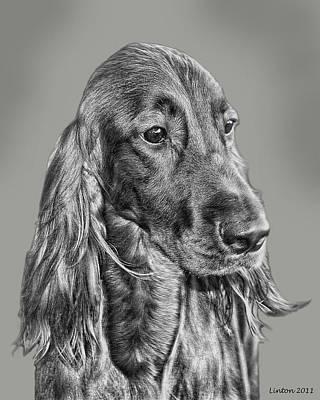 Canines Digital Art - Irish Setter Portrait by Larry Linton
