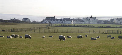 Irish Sheep Farm Art Print