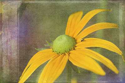 Photograph - Irish Spring Rudbeckia by Cindi Ressler