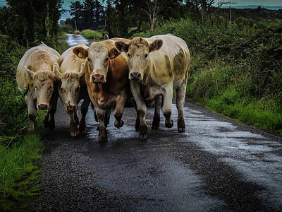 Photograph - Irish Traffic Jam by James Truett