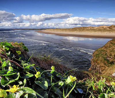 Digital Art - Irish Wild Caltha Flower On The Clifftop Above Tullan Strand In The Spring Sunshine by John Carver
