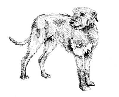 Irish Wolfhound Drawing - Irish Wolfhound by Aria La Faye