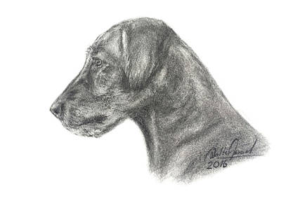 Wolfhound Drawing - Irish Wolfhound by Walter Israel