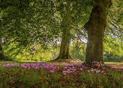 Photograph - Irish Woodland by Adrian O Brien