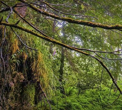 Photograph - Irish Woods #h0 by Leif Sohlman