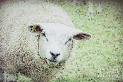 Photograph - Irish Wool by Jean OKeeffe Macro Abundance Art