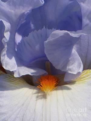 Iris's Iris Art Print