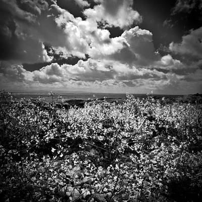Photograph - Irland 33 by Avril Christophe