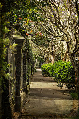 Photograph - Iron Gate And Crepe Myrtle by Kristina Austin Scarcelli