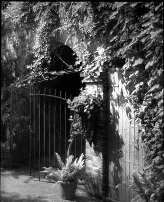 Photograph - Iron Gate And Wooden Door by Crescent City Collective