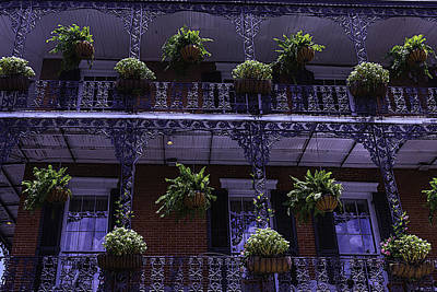 Rue Photograph - Iron Railings And Plants by Garry Gay