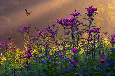 Ron Jones Photograph - Ironweed by Ron Jones