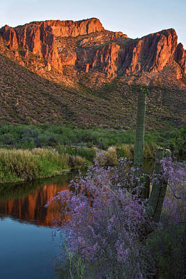 Photograph - Ironwood And Saguaro Vertical by Dave Dilli