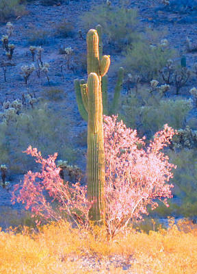 Photograph - Ironwood Saguaro Dance by Judy Kennedy