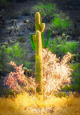 Photograph - Ironwood Saguaro Dance Vignette by Judy Kennedy