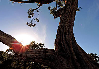 Photograph - Ironwood Silhouett by Grace Dillon