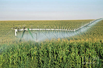 Irrigated Corn Crop Art Print by Inga Spence