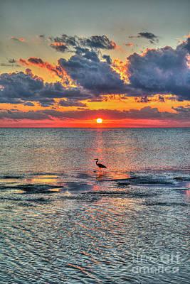Photograph - Is This A Heron Egrett Or Crane by David Zanzinger