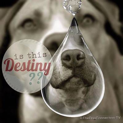 Animals Royalty-Free and Rights-Managed Images - Is this Destiny by Kathy Tarochione