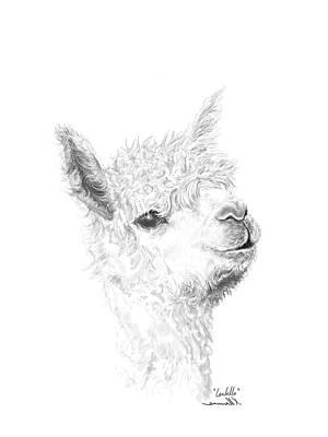 Drawing - Isabella by K Llamas