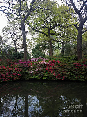 Photograph - Isabella Plantation by Hanza Turgul