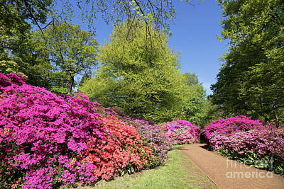 Photograph - Isabella Plantation In Richmond Park London by Julia Gavin