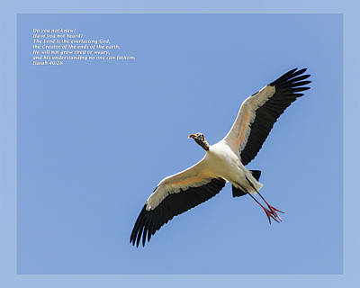 Photograph - Isaiah 40 28 by Dawn Currie