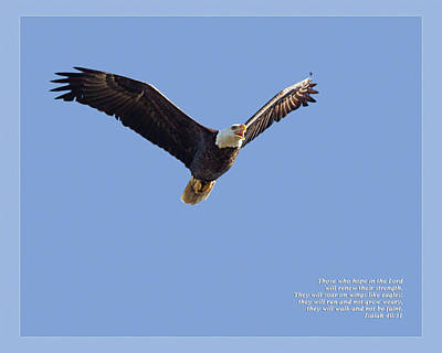Photograph - Isaiah 40 31 by Dawn Currie