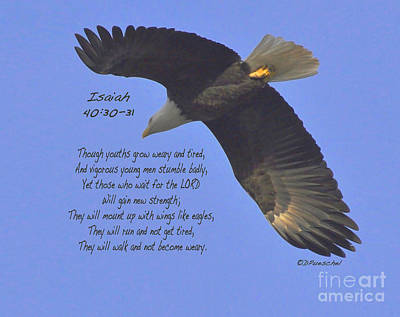Isaiah 40 V 30 And 31 Art Print by Debby Pueschel