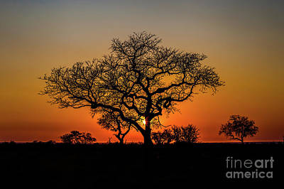 Photograph - Isimangaliso Wetland Park by Benny Marty