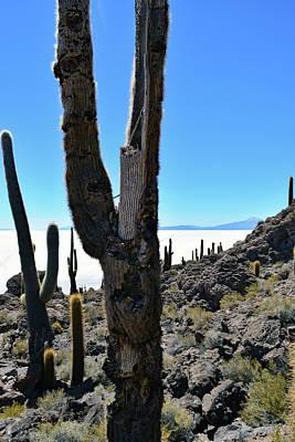 Photograph - Isla Incahuasi, Salar De Uyuni, Bolivia No. 148 by Sandy Taylor