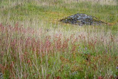 Photograph - Island Field by Tom Singleton