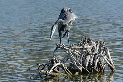 Photograph - Island Fishing by Fraida Gutovich