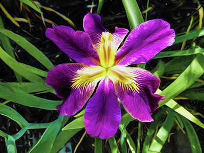 Photograph - Island Iris 2 by Penny Lisowski