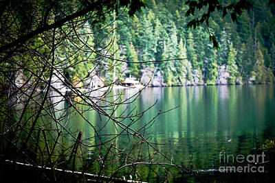 Photograph - Lake Cathedral Grove by Donna L Munro